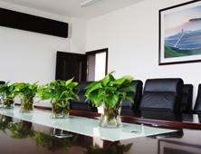 绿植租摆,办公室租摆案例,会议室摆设