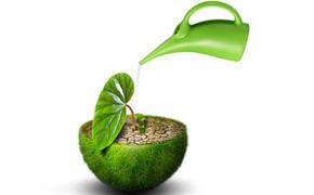 绿植租摆,绿宝网